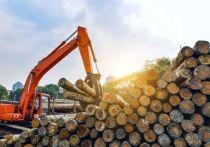 Лесную отрасль в Тверской области спасут хозяйский подход и космические технологии