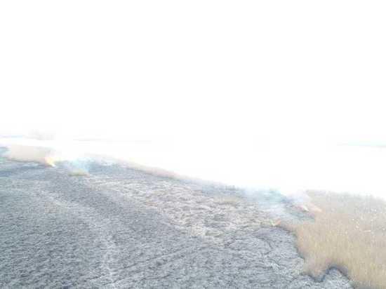 Пожар в плавнях под Темрюком потушили