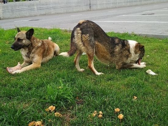 В Щекино пройдет отлов бродячих собак
