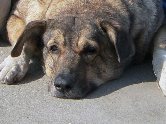В Якутске нашли контейнер с сотней трупов собак и кошек