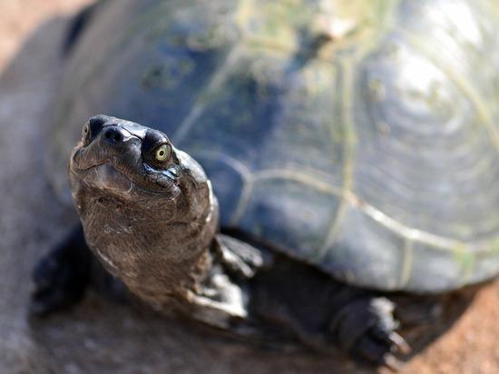 Съевшая 915 монет черепаха умерла