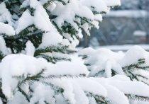 Саратовские синоптики ждут снегопада