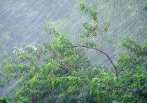 Весна в Иванове — проливные дожди, ураганный ветер, снег. Но ненадолго