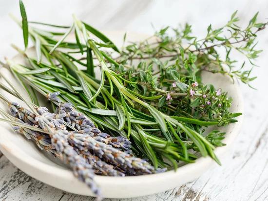 Названы лечебные травы, улучшающие кровообращение в ногах
