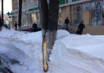 В Кемерове снова кромсают деревья при уборке снега с газонов