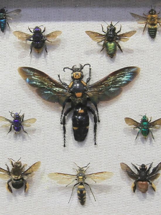 В Алматы презентовали самую большую в Казахстане коллекцию тропических насекомых