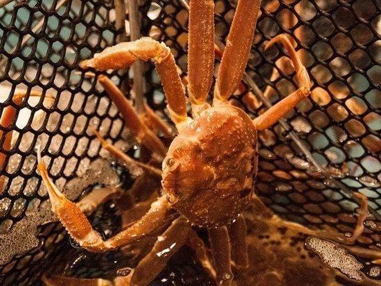 Почему камчатские рыбаки не участвовали в крабовых аукционах?