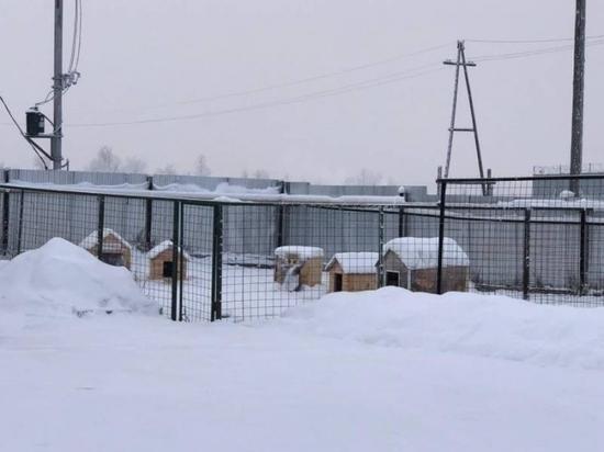 Глава Якутии запретил эвтаназию собак в Якутске