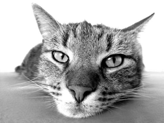 Проктолог: этими тремя болезнями можно легко заразиться от кошки