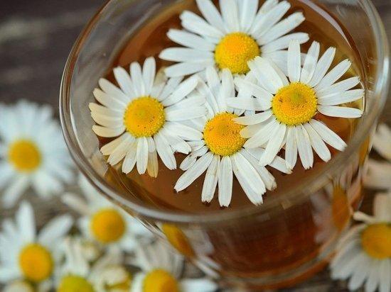 Медики: ромашковый чай – кладезь полезных веществ