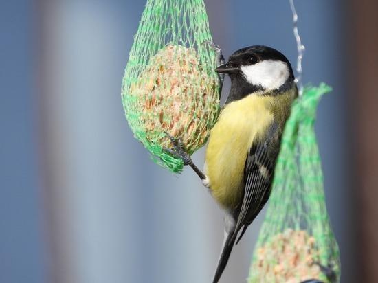 «Курловское лесничество» подвело итоги акции «Покормите птиц зимой»
