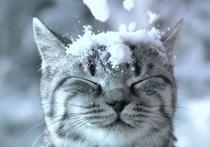 Жителей Твери предупреждают об опасности падающего с крыш снега