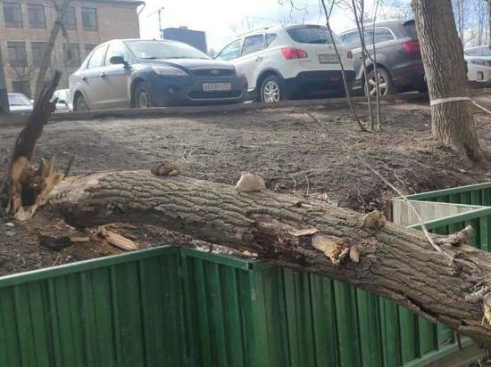 Дерево, упавшее на женщину в центре Москвы, не входило в список аварийных