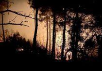 Ночью около Дивноморска горело 20 гектар леса