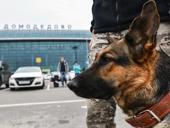 """Количество """"заминированных"""" российских самолетов выросло до шести"""