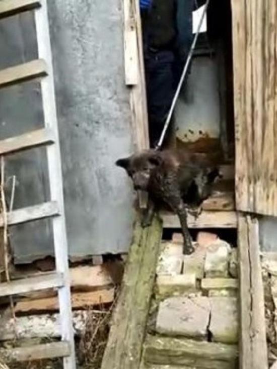 В Ярославле собака чуть не утонула в дачном туалете