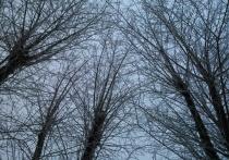 В выходные в Перми похолодает