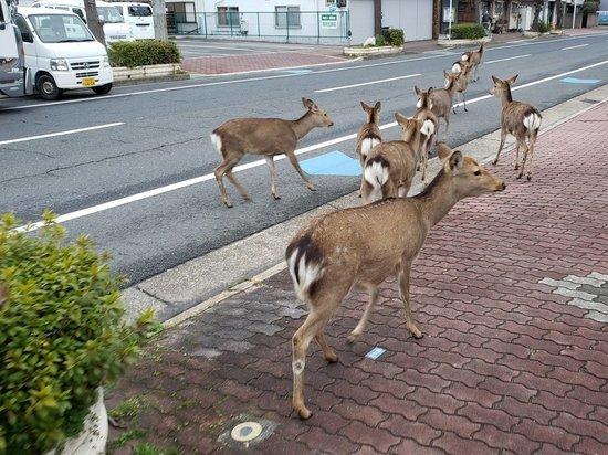 По улицам с видом бывалых туристов стали разгуливать дикие звери
