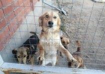 Под Тулой разогнали собак и сожгли вольеры монастырского зооприюта
