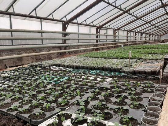 Йошкар-Олу украсят более 300 тысяч цветов