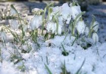 Последняя неделя марта принесет в Киров потепление