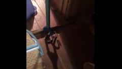В московскую квартиру заползла агрессивная змея: видео