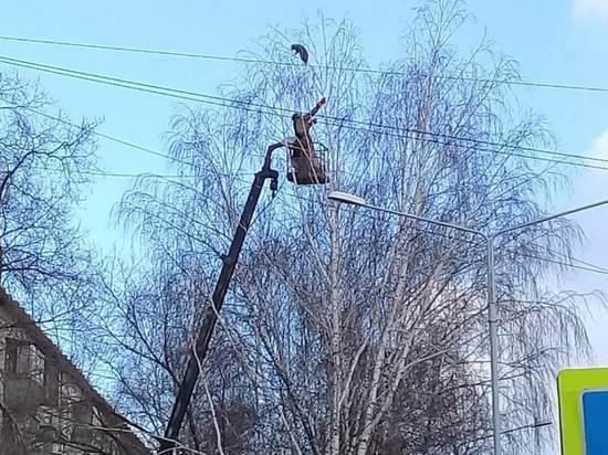 В Новосибирской области с березы уронили енота Варвару