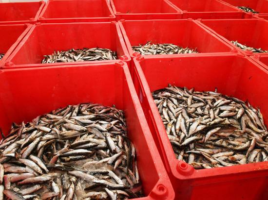 На Ямале открыли первый распределительный центр для хранения рыбы