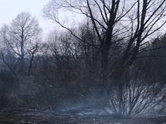 Под Мещовком горел лес