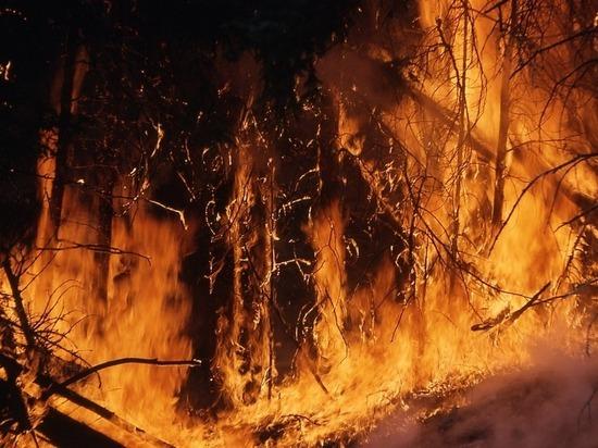 Первые лесные пожары зарегистрированы в Хабаровском крае