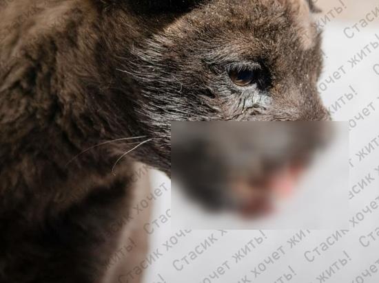 Живодеры петардой разорвали пасть щенку в Забайкалье