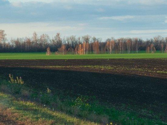 В Тамбовской области начались полевые работы