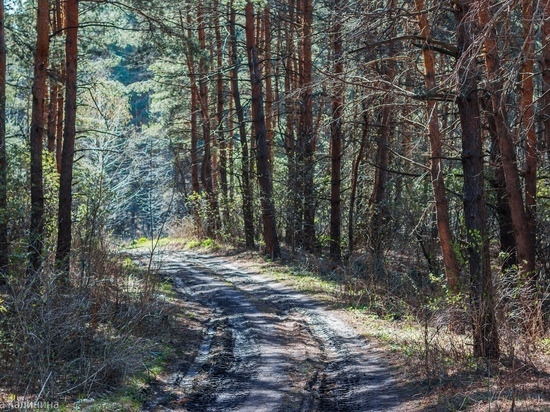 В Тамбовской области проводится противопожарное обустройство лесов