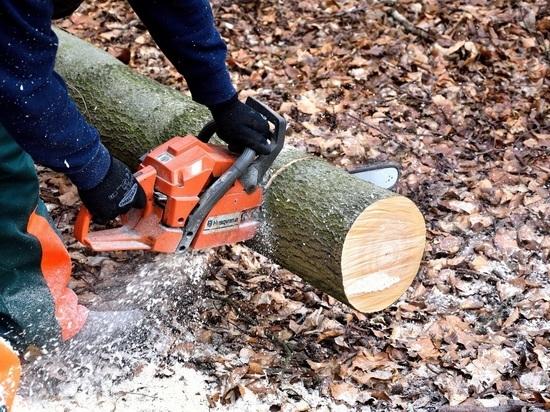 В Марий Эл черные лесорубы уничтожили 27 деревьев