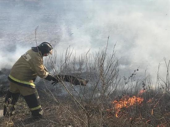 Спасатели тушат загоревшийся камыш в Ростовской области
