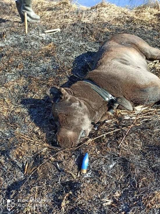 Застреленную породистую собаку нашли в деревне под Тверью