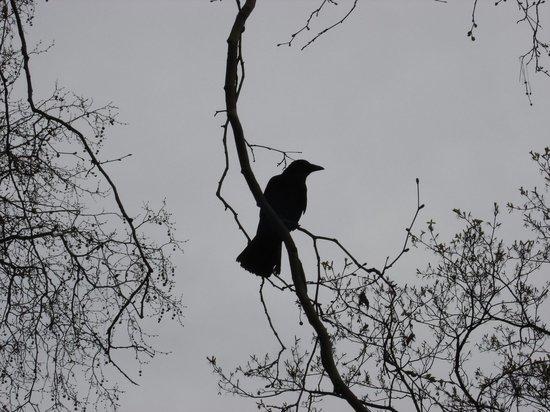 В Казани около детского сада неизвестный отстреливал ворон