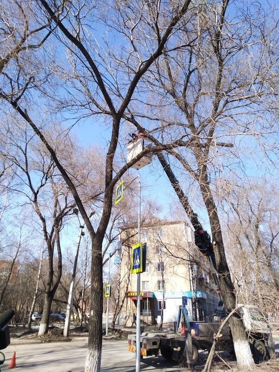 Сергей Кузнецов пояснил, почему в городе обрезают деревья