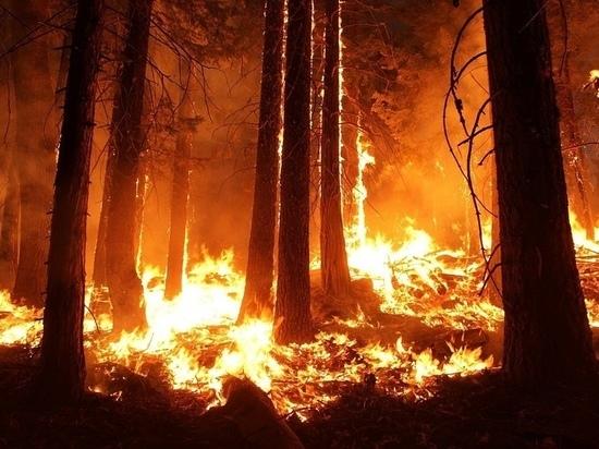 Первый лесной пожар зафиксировали в Псковской области