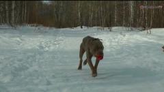 Пес из Мурманска, которому грозило усыпление, нашел дом в Челябинске