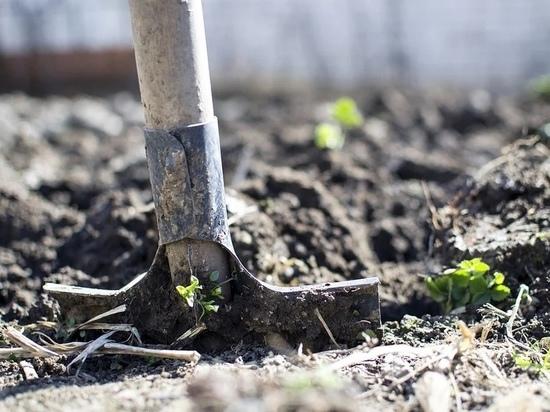 Житель Красногородска заставил знакомого копать себе могилу