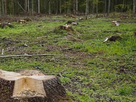 Мужчина незаконно спилил деревья в Арзамасском районе