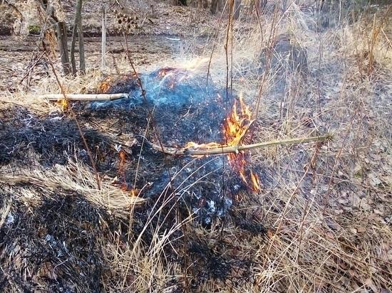 Тульские пожарные напомнили о штрафах за пал травы