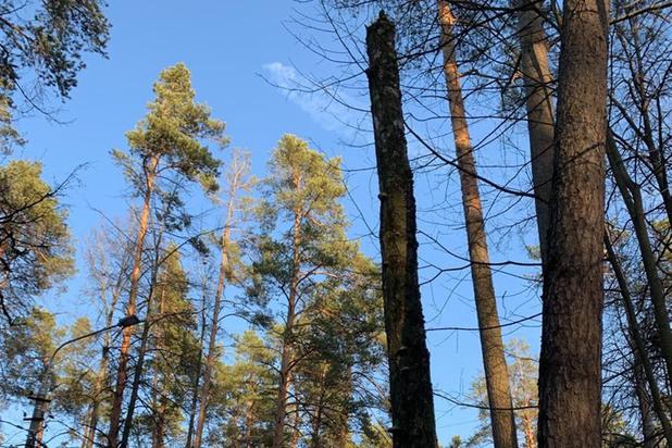 В Новой Москве альпиниста убило березой, которую он пилил