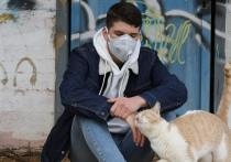 Псковская полиция напомнила о наказании за распространение фейков о коронавирусе