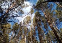Воздух прогреется до 10 градусов тепла в последнее воскресенье марта в Забайкалье