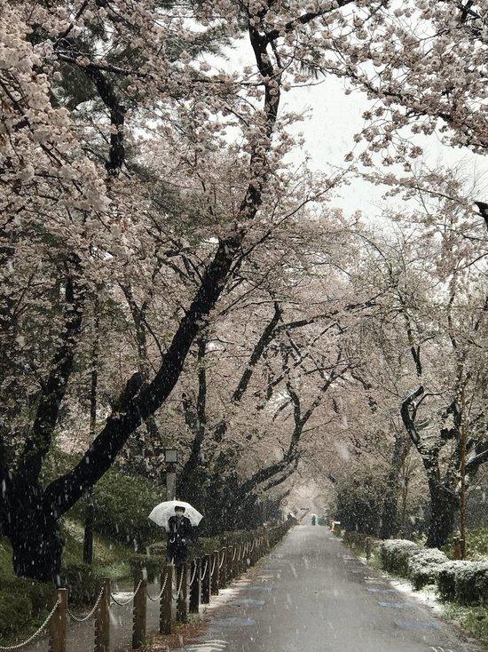 Впервые за 10 лет в Токио пошел снег в конце марта