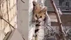 Дикий кот-сервал пришел в гости в московскую квартиру по карнизу: видео