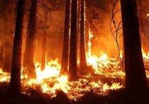 Лесные пожары бушуют в Хабаровском крае на площади 1,05 тыс. га