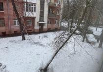 В Кострому идет снегопад, соседей уже накрыло